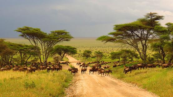 Lijkt een Safari Afrika je iets?